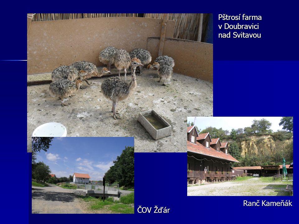 Ranč Kameňák Pštrosí farma v Doubravici nad Svitavou ČOV Žďár