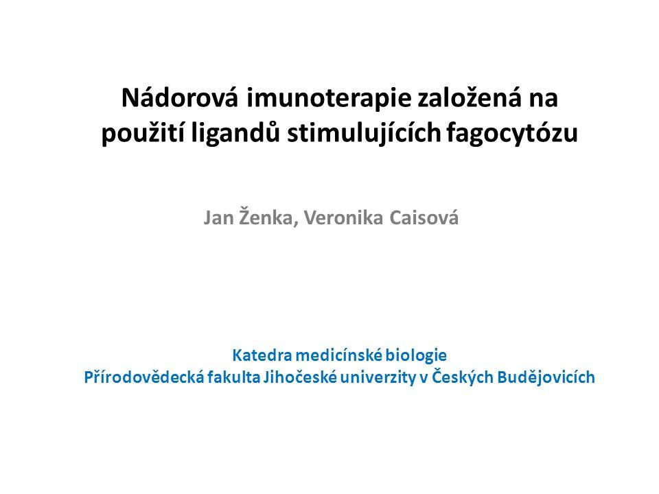 Nádorová imunoterapie založená na použití ligandů stimulujících fagocytózu Jan Ženka, Veronika Caisová Katedra medicínské biologie Přírodovědecká fakulta Jihočeské univerzity v Českých Budějovicích