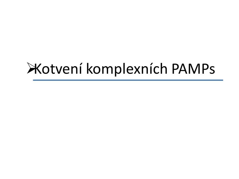  Kotvení komplexních PAMPs