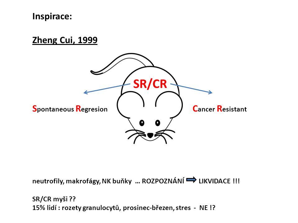 Inspirace: Zheng Cui, 1999 S pontaneous R egresion C ancer R esistant neutrofily, makrofágy, NK buňky … ROZPOZNÁNÍ LIKVIDACE !!! SR/CR myši ?? 15% lid