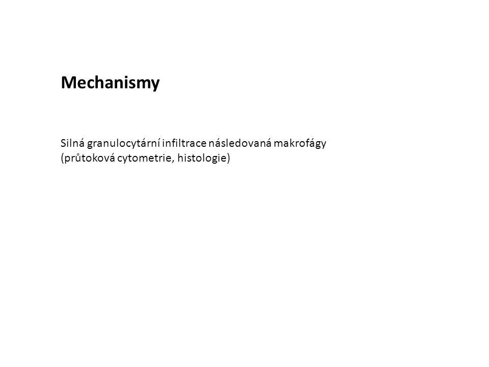 Mechanismy Silná granulocytární infiltrace následovaná makrofágy (průtoková cytometrie, histologie)