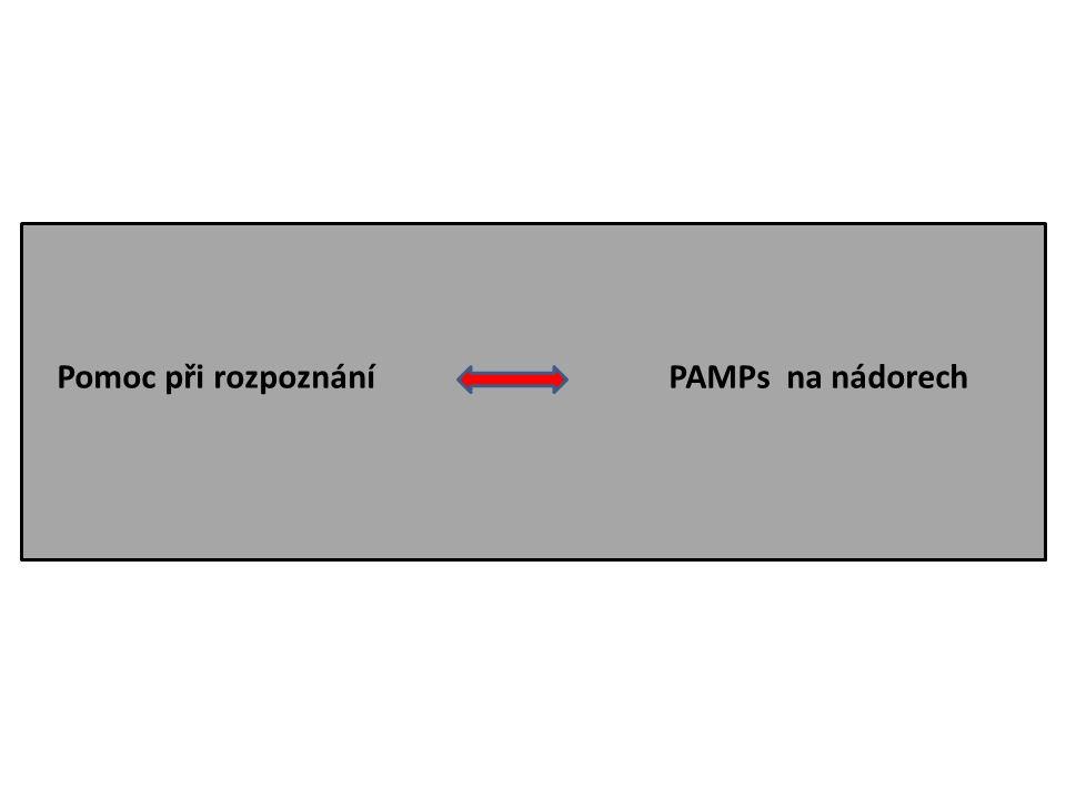 Pomoc při rozpoznání PAMPs na nádorech