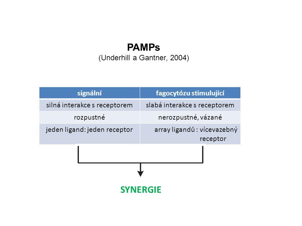 PAMPs (Underhill a Gantner, 2004) signálnífagocytózu stimulující silná interakce s receptoremslabá interakce s receptorem rozpustnénerozpustné, vázané jeden ligand: jeden receptorarray ligandů : vícevazebný receptor SYNERGIE