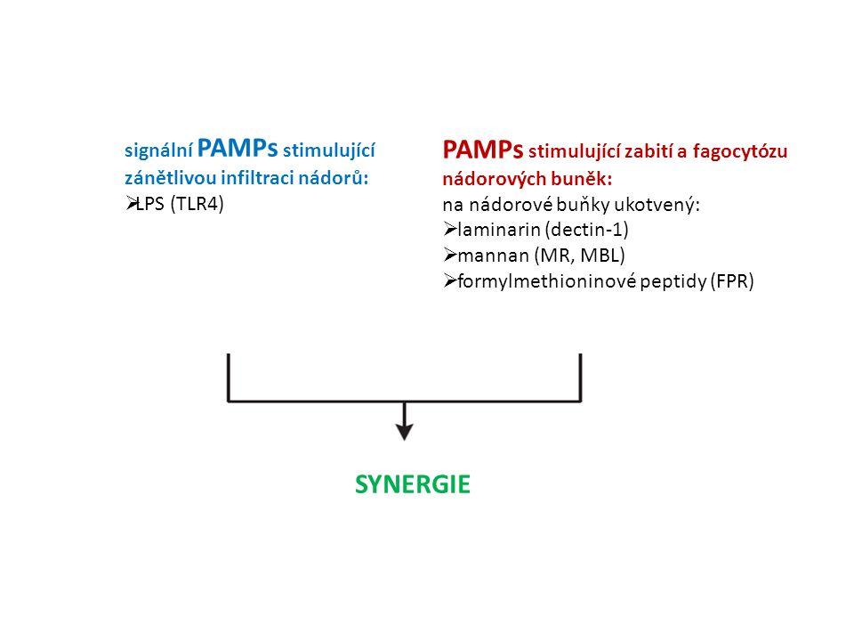 signální PAMPs stimulující zánětlivou infiltraci nádorů:  LPS (TLR4) PAMPs stimulující zabití a fagocytózu nádorových buněk: na nádorové buňky ukotvený:  laminarin (dectin-1)  mannan (MR, MBL)  formylmethioninové peptidy (FPR) SYNERGIE