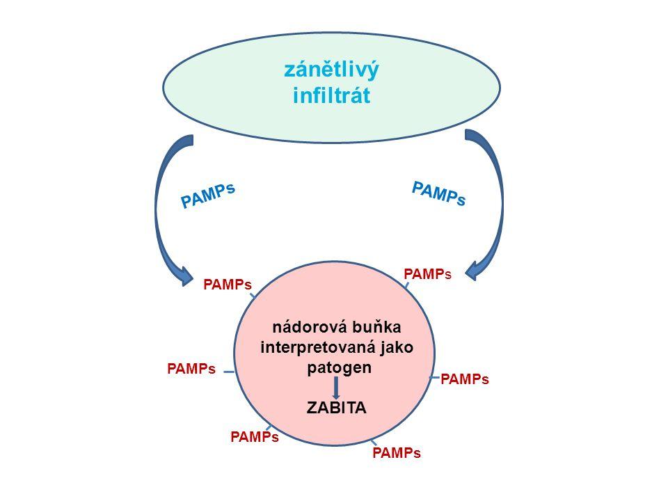 zánětlivý infiltrát nádorová buňka interpretovaná jako patogen ZABITA PAMPs