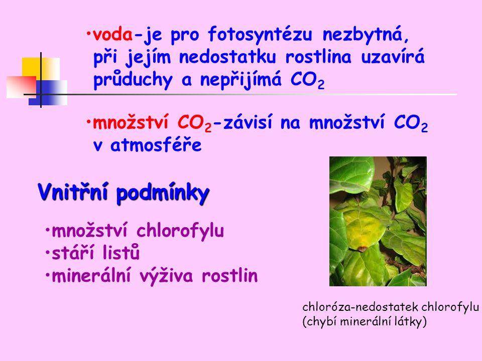voda-je pro fotosyntézu nezbytná, při jejím nedostatku rostlina uzavírá průduchy a nepřijímá CO 2 množství CO 2 -závisí na množství CO 2 v atmosféře Vnitřní podmínky množství chlorofylu stáří listů minerální výživa rostlin chloróza-nedostatek chlorofylu (chybí minerální látky)