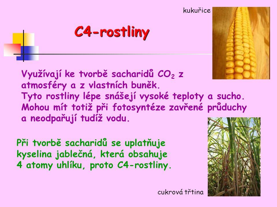 C4-rostliny Využívají ke tvorbě sacharidů CO 2 z atmosféry a z vlastních buněk.