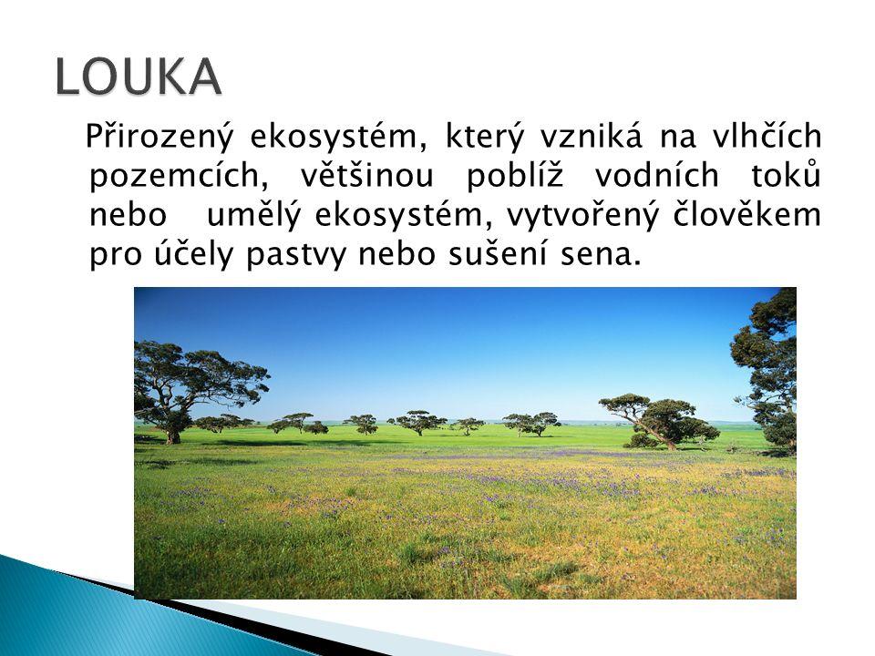 Přirozený ekosystém, který vzniká na vlhčích pozemcích, většinou poblíž vodních toků nebo umělý ekosystém, vytvořený člověkem pro účely pastvy nebo sušení sena.