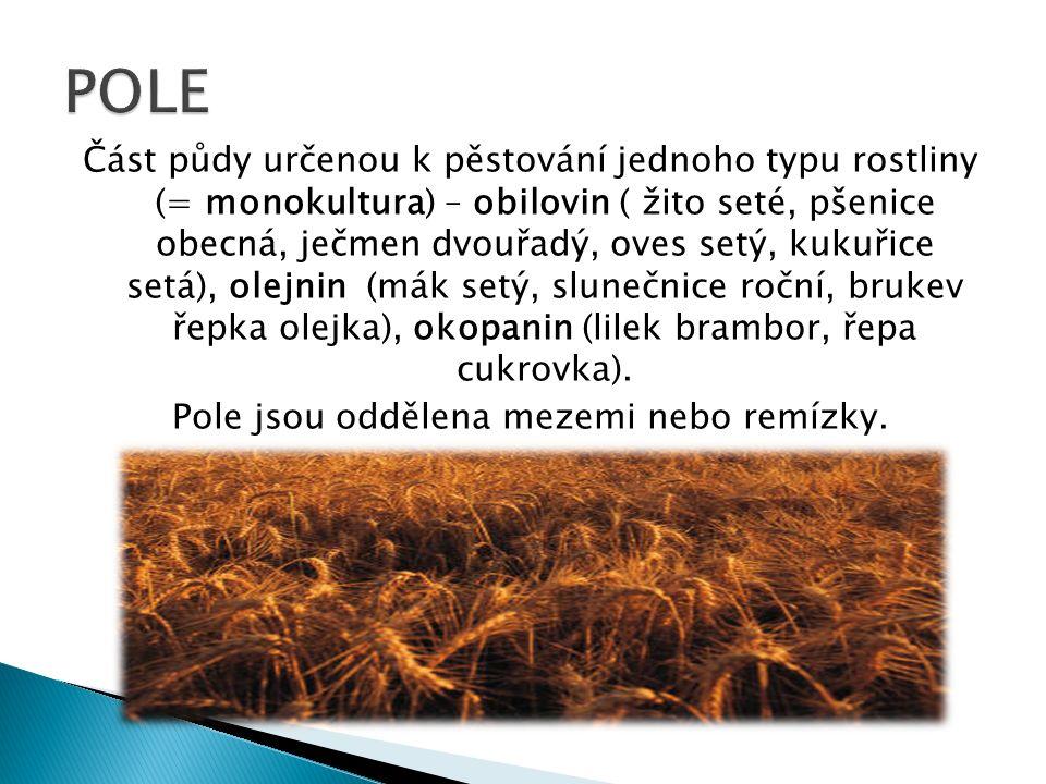 Část půdy určenou k pěstování jednoho typu rostliny (= monokultura) – obilovin ( žito seté, pšenice obecná, ječmen dvouřadý, oves setý, kukuřice setá), olejnin (mák setý, slunečnice roční, brukev řepka olejka), okopanin (lilek brambor, řepa cukrovka).