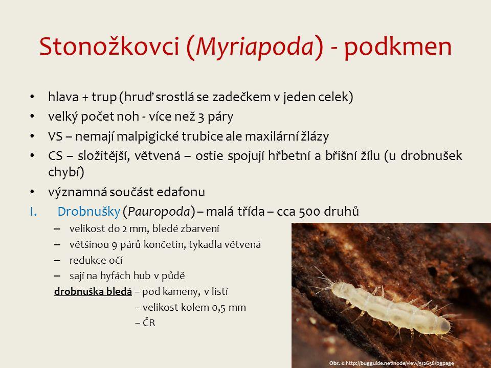 Stonožkovci (Myriapoda) - podkmen hlava + trup (hruď srostlá se zadečkem v jeden celek) velký počet noh - více než 3 páry VS – nemají malpigické trubice ale maxilární žlázy CS – složitější, větvená – ostie spojují hřbetní a břišní žílu (u drobnušek chybí) významná součást edafonu I.Drobnušky (Pauropoda) – malá třída – cca 500 druhů – velikost do 2 mm, bledé zbarvení – většinou 9 párů končetin, tykadla větvená – redukce očí – sají na hyfách hub v půdě drobnuška bledá – pod kameny, v listí – velikost kolem 0,5 mm – ČR Obr.