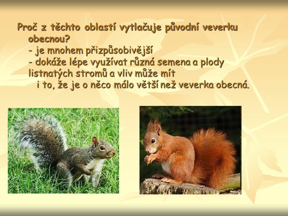 Proč z těchto oblastí vytlačuje původní veverku obecnou.