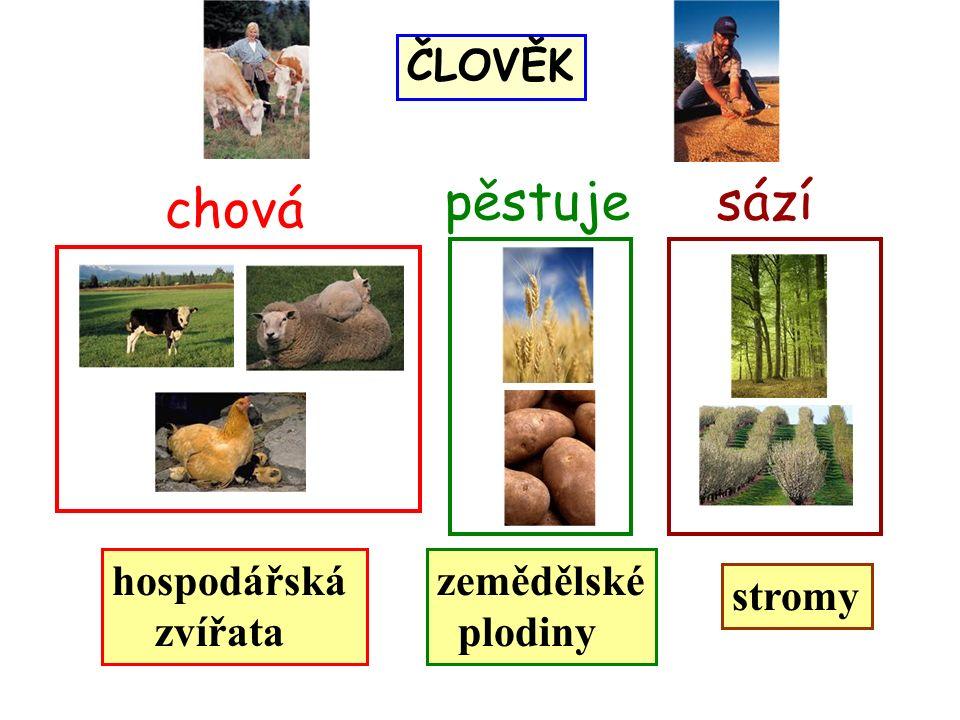 hospodářská zvířata PŘÍRODNINY stromy zemědělské plodiny