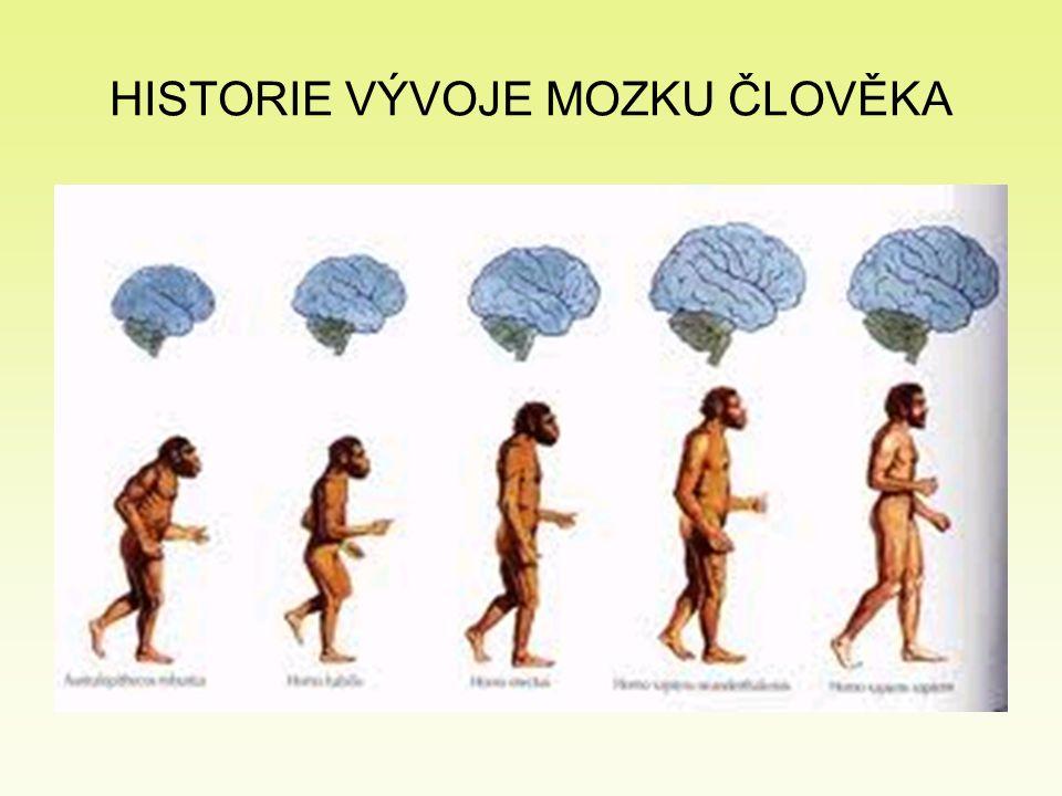 HISTORIE VÝVOJE MOZKU ČLOVĚKA