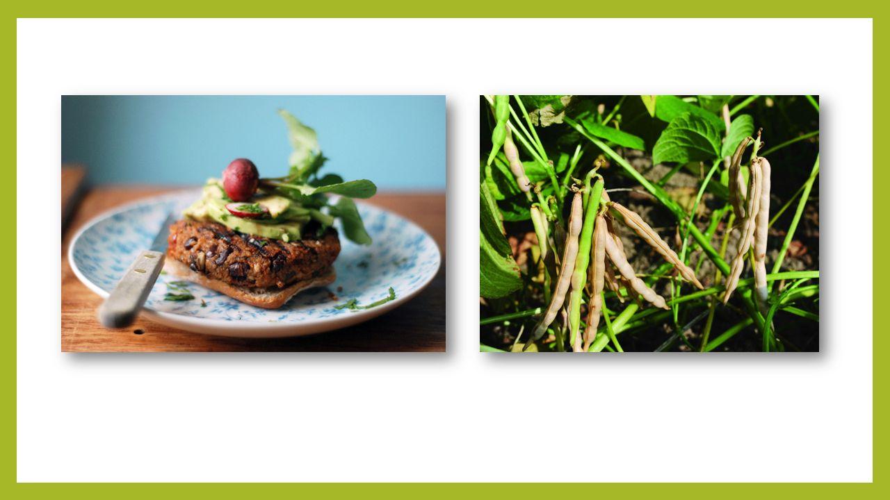 Špalda Popis: druh rozpadavé pšenice byla pěstována v Evropě již před 8000 lety, pěstovali ji Egypťané, Keltové i Germáni má vyšší podíl minerálních látek a bílkovin než normální pšenice Využití: potravina (praží se z ní špaldová káva, která je bez kofeinu) stavebnictví (špaldovou slámu můžeme využít k výrobě došků – původní střešní krytiny.
