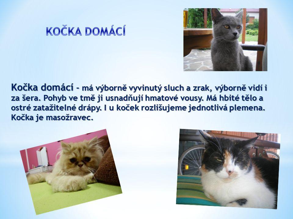 Kočka domácí – má výborně vyvinutý sluch a zrak, výborně vidí i za šera.