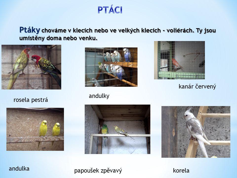 Ptáky chováme v klecích nebo ve velkých klecích - voliérách.