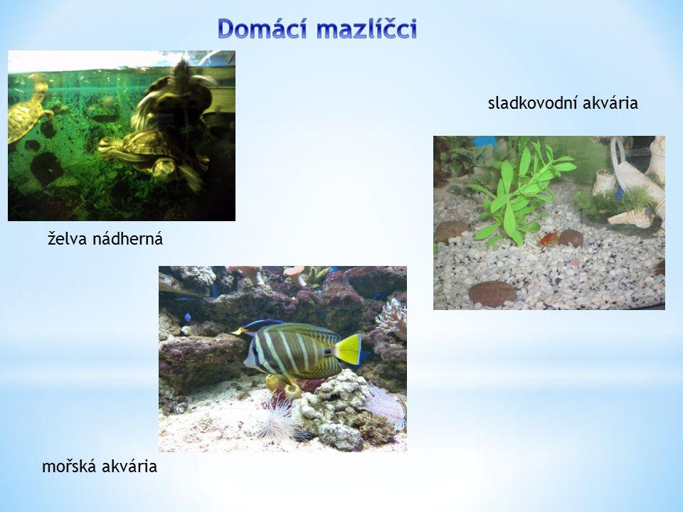 želva nádherná sladkovodní akvária mořská akvária