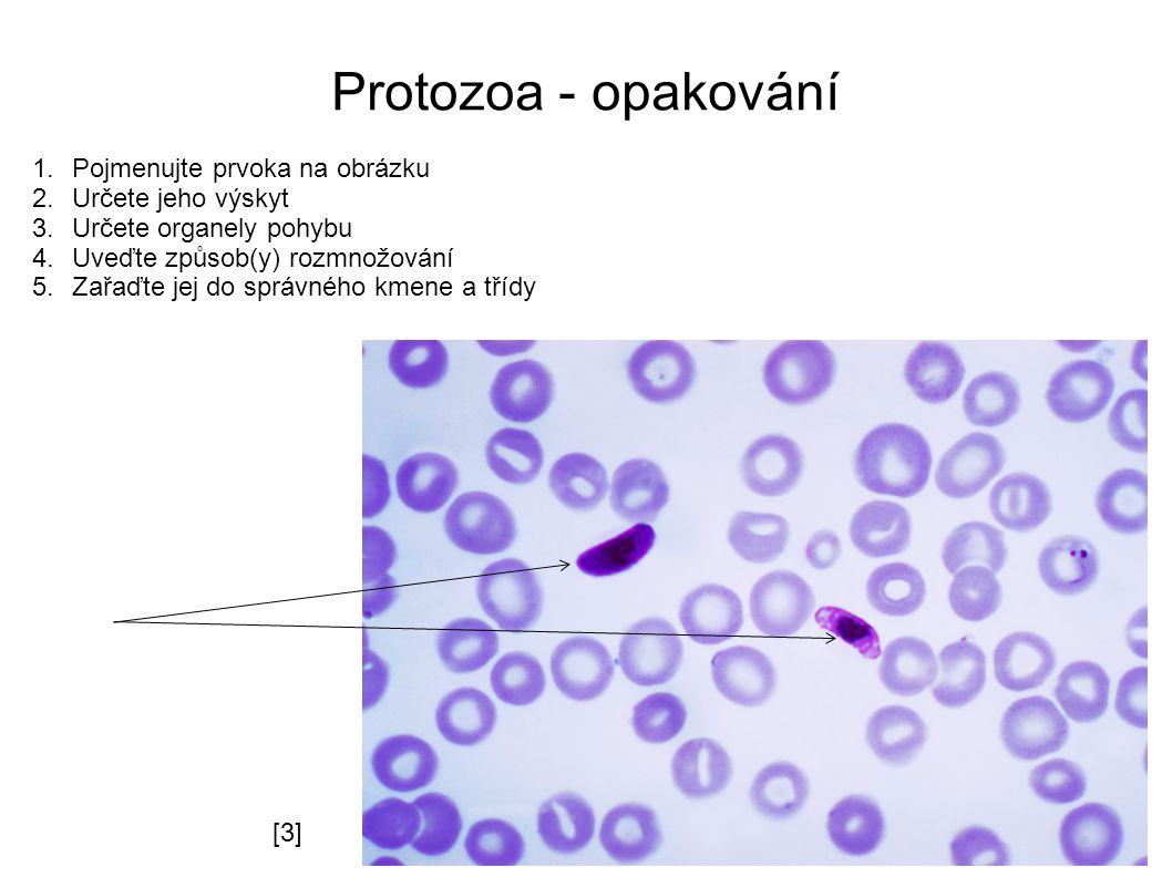 Protozoa - opakování 1.Pojmenujte prvoka na obrázku 2.Určete jeho výskyt 3.Určete organely pohybu 4.Uveďte způsob(y) rozmnožování 5.Zařaďte jej do správného kmene a třídy [2][2] [3][3]
