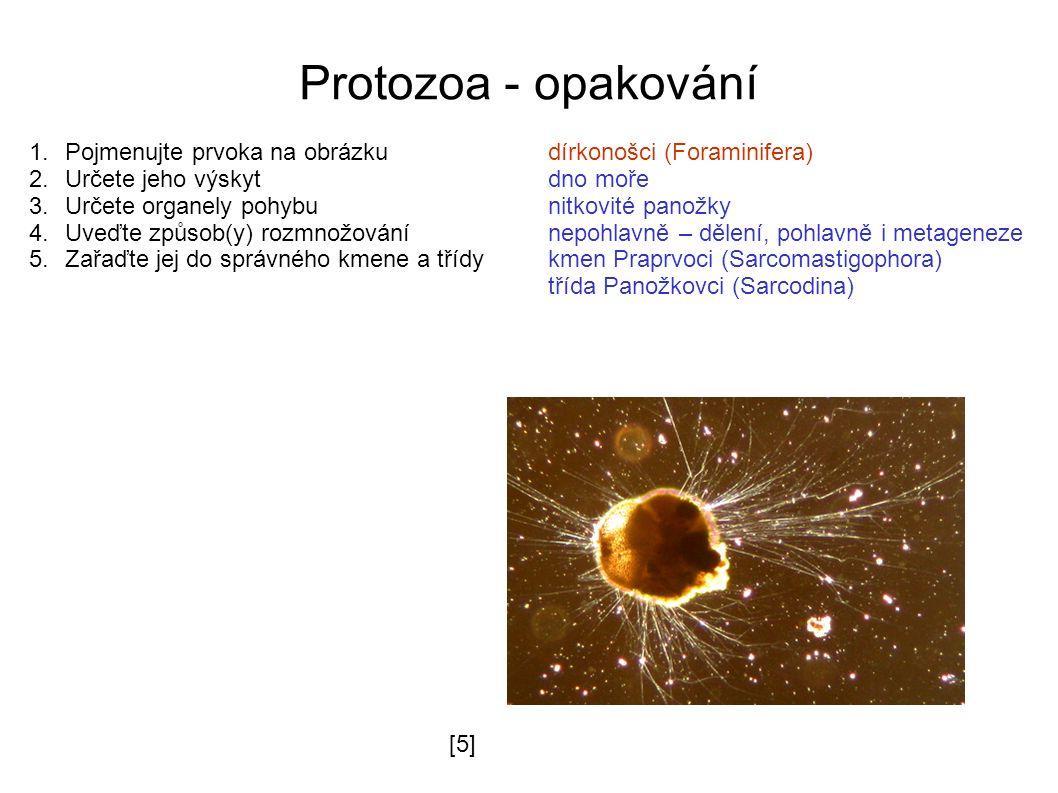 Protozoa - opakování 1.Pojmenujte prvoka na obrázkudírkonošci (Foraminifera) 2.Určete jeho výskytdno moře 3.Určete organely pohybunitkovité panožky 4.Uveďte způsob(y) rozmnožovánínepohlavně – dělení, pohlavně i metageneze 5.Zařaďte jej do správného kmene a třídykmen Praprvoci (Sarcomastigophora) třída Panožkovci (Sarcodina) [5][5]
