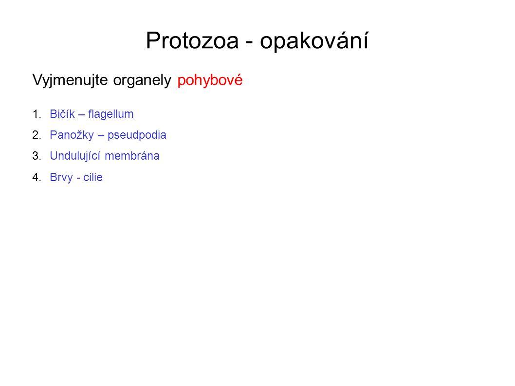 Protozoa - opakování Vyjmenujte organely pohybové 1.Bičík – flagellum 2.Panožky – pseudpodia 3.Undulující membrána 4.Brvy - cilie