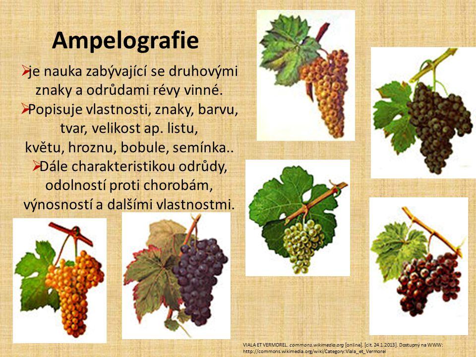  je nauka zabývající se druhovými znaky a odrůdami révy vinné.