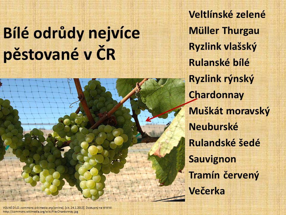 Bílé odrůdy nejvíce pěstované v ČR Veltlínské zelené Müller Thurgau Ryzlink vlašský Rulanské bílé Ryzlink rýnský Chardonnay Muškát moravský Neuburské Rulandské šedé Sauvignon Tramín červený Večerka VOLNÉ DÍLO.