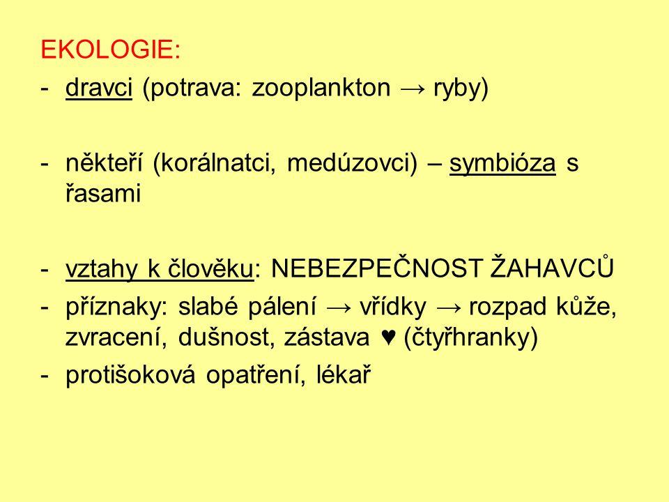 EKOLOGIE: -dravci (potrava: zooplankton → ryby) -někteří (korálnatci, medúzovci) – symbióza s řasami -vztahy k člověku: NEBEZPEČNOST ŽAHAVCŮ -příznaky: slabé pálení → vřídky → rozpad kůže, zvracení, dušnost, zástava ♥ (čtyřhranky) -protišoková opatření, lékař