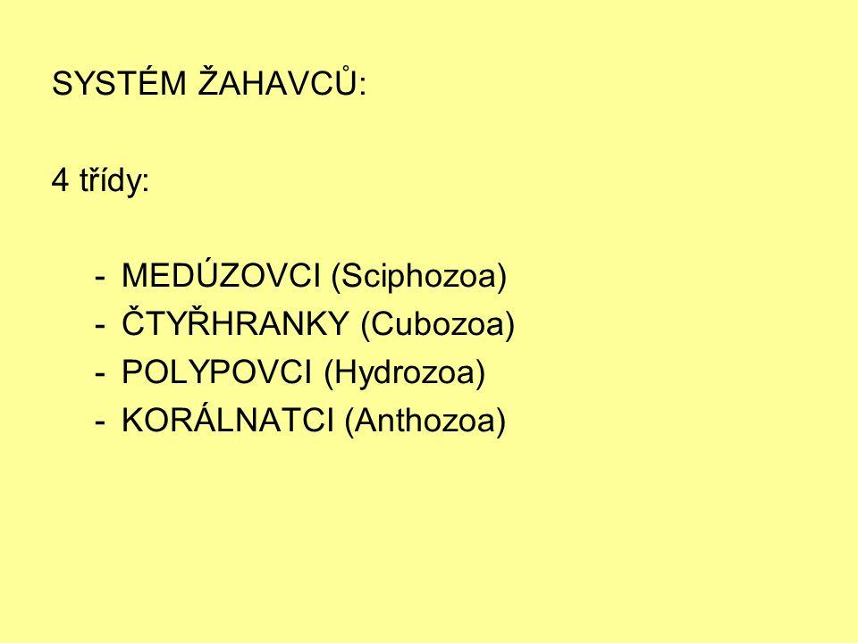 SYSTÉM ŽAHAVCŮ: 4 třídy: -MEDÚZOVCI (Sciphozoa) -ČTYŘHRANKY (Cubozoa) -POLYPOVCI (Hydrozoa) -KORÁLNATCI (Anthozoa)