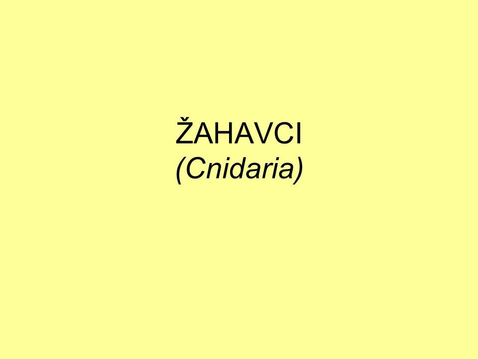 ŽAHAVCI (Cnidaria)