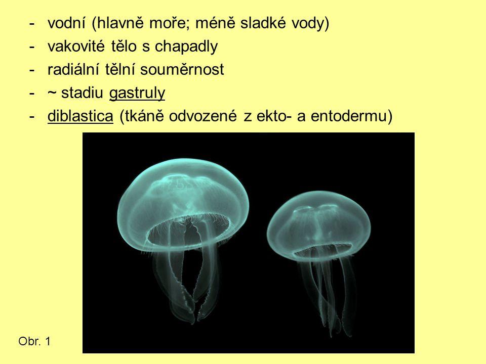 -vodní (hlavně moře; méně sladké vody) -vakovité tělo s chapadly -radiální tělní souměrnost -~ stadiu gastruly -diblastica (tkáně odvozené z ekto- a e