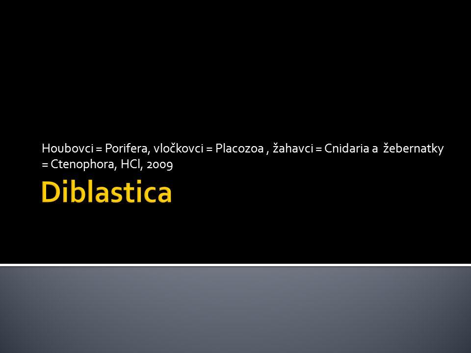 Houbovci = Porifera, vločkovci = Placozoa, žahavci = Cnidaria a žebernatky = Ctenophora, HCl, 2009