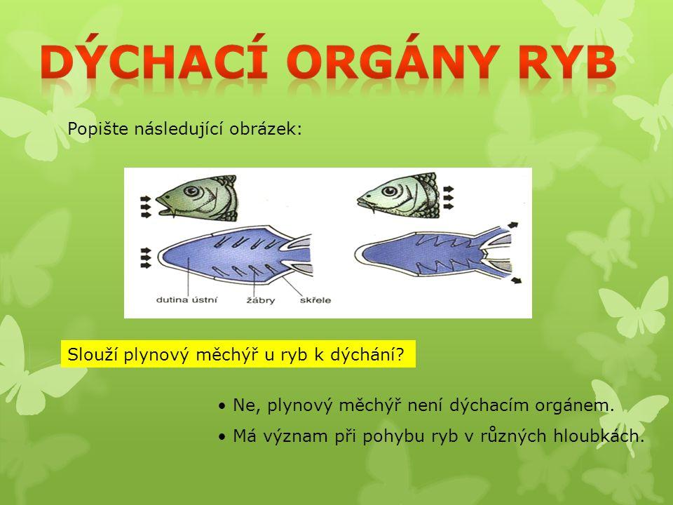 Popište následující obrázek: Slouží plynový měchýř u ryb k dýchání? Ne, plynový měchýř není dýchacím orgánem. Má význam při pohybu ryb v různých hloub