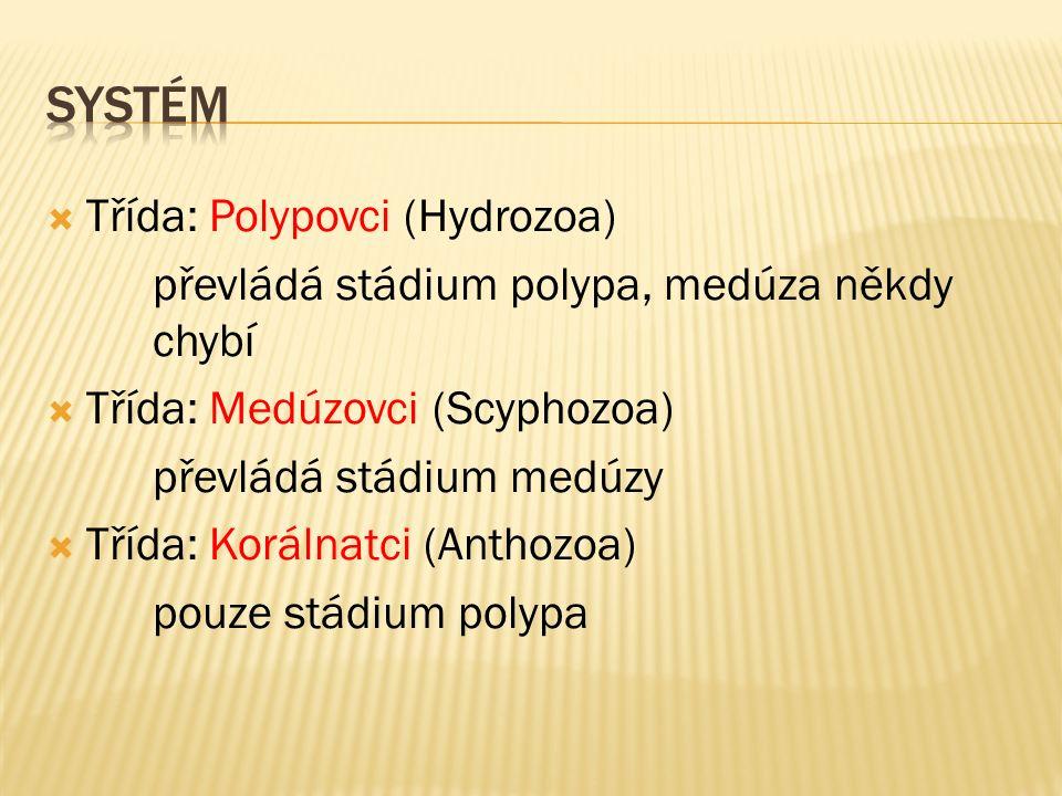  Třída: Polypovci (Hydrozoa) převládá stádium polypa, medúza někdy chybí  Třída: Medúzovci (Scyphozoa) převládá stádium medúzy  Třída: Korálnatci (