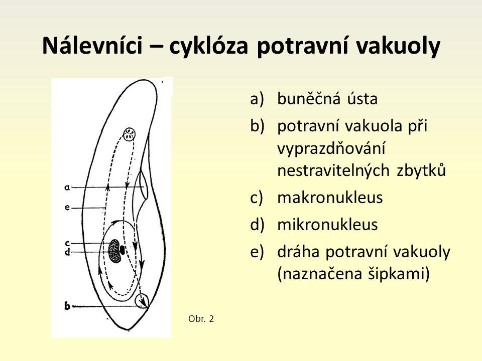 Nálevníci – cyklóza potravní vakuoly a)buněčná ústa b)potravní vakuola při vyprazdňování nestravitelných zbytků c)makronukleus d)mikronukleus e)dráha