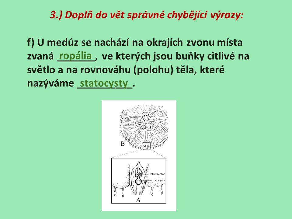 3.) Doplň do vět správné chybějící výrazy: f) U medúz se nachází na okrajích zvonu místa zvaná _______, ve kterých jsou buňky citlivé na světlo a na rovnováhu (polohu) těla, které nazýváme __________.