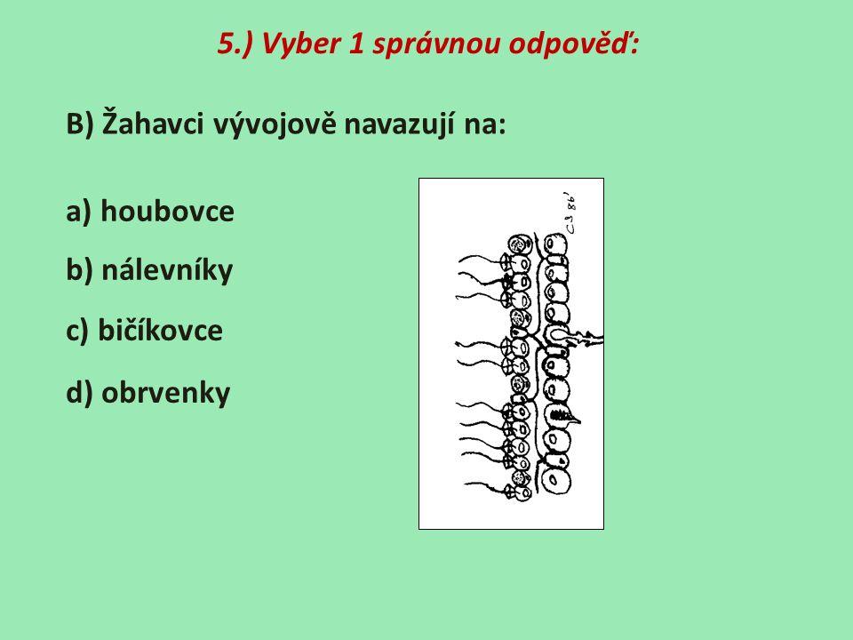 5.) Vyber 1 správnou odpověď: B) Žahavci vývojově navazují na: a) houbovce b) nálevníky c) bičíkovce d) obrvenky