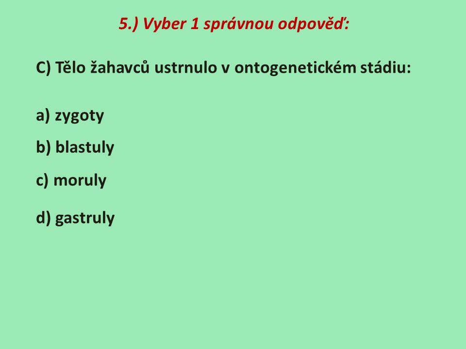5.) Vyber 1 správnou odpověď: C) Tělo žahavců ustrnulo v ontogenetickém stádiu: a) zygoty b) blastuly c) moruly d) gastruly