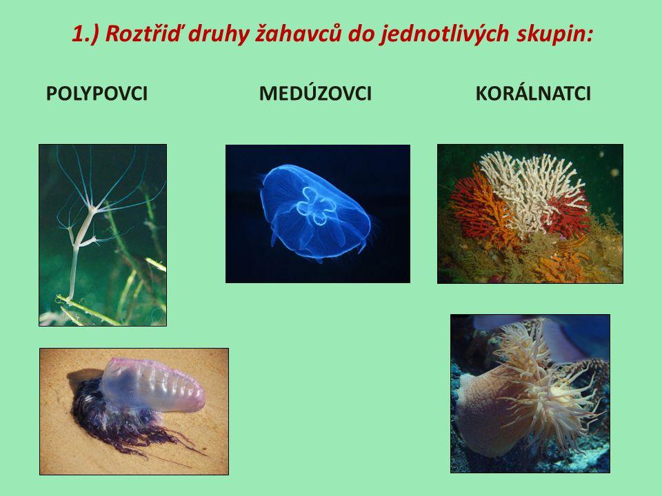 1.) Roztřiď druhy žahavců do jednotlivých skupin: POLYPOVCI MEDÚZOVCI KORÁLNATCI