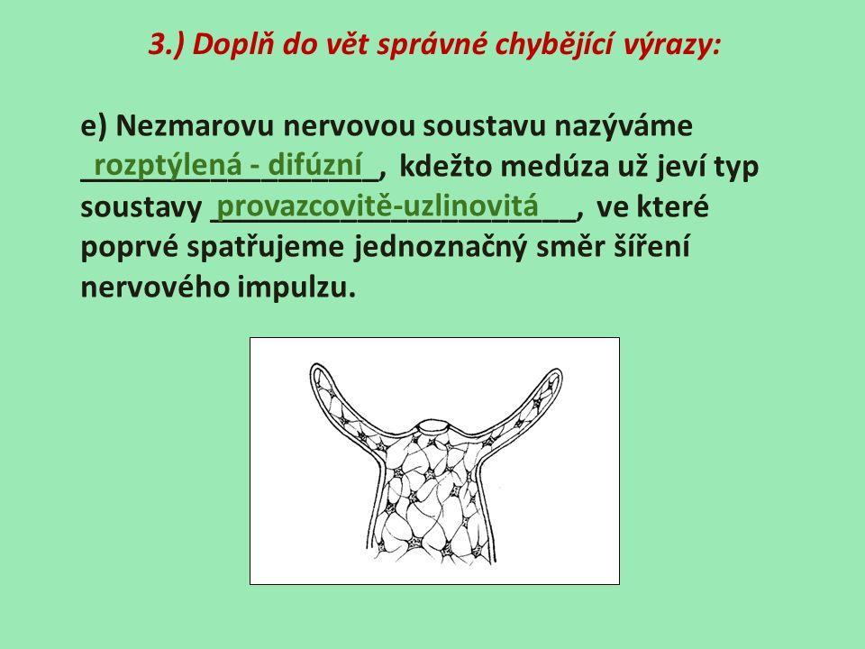 3.) Doplň do vět správné chybějící výrazy: e) Nezmarovu nervovou soustavu nazýváme __________________, kdežto medúza už jeví typ soustavy ____________