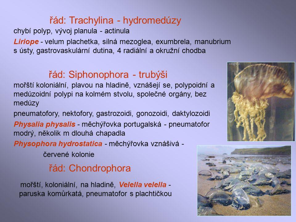 řád: Trachylina - hydromedúzy chybí polyp, vývoj planula - actinula Liriope - velum plachetka, silná mezoglea, exumbrela, manubrium s ústy, gastrovaskulární dutina, 4 radiální a okružní chodba řád: Siphonophora - trubýši mořští koloniální, plavou na hladině, vznášejí se, polypoidní a medúzoidní polypi na kolmém stvolu, společné orgány, bez medúzy pneumatofory, nektofory, gastrozoidi, gonozoidi, daktylozoidi Physalia physalis - měchýřovka portugalská - pneumatofor modrý, několik m dlouhá chapadla Physophora hydrostatica - měchýřovka vznášivá - červené kolonie řád: Chondrophora mořští, koloniální, na hladině, Velella velella - paruska komůrkatá, pneumatofor s plachtičkou