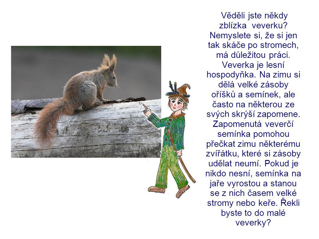 Věděli jste někdy zblízka veverku.