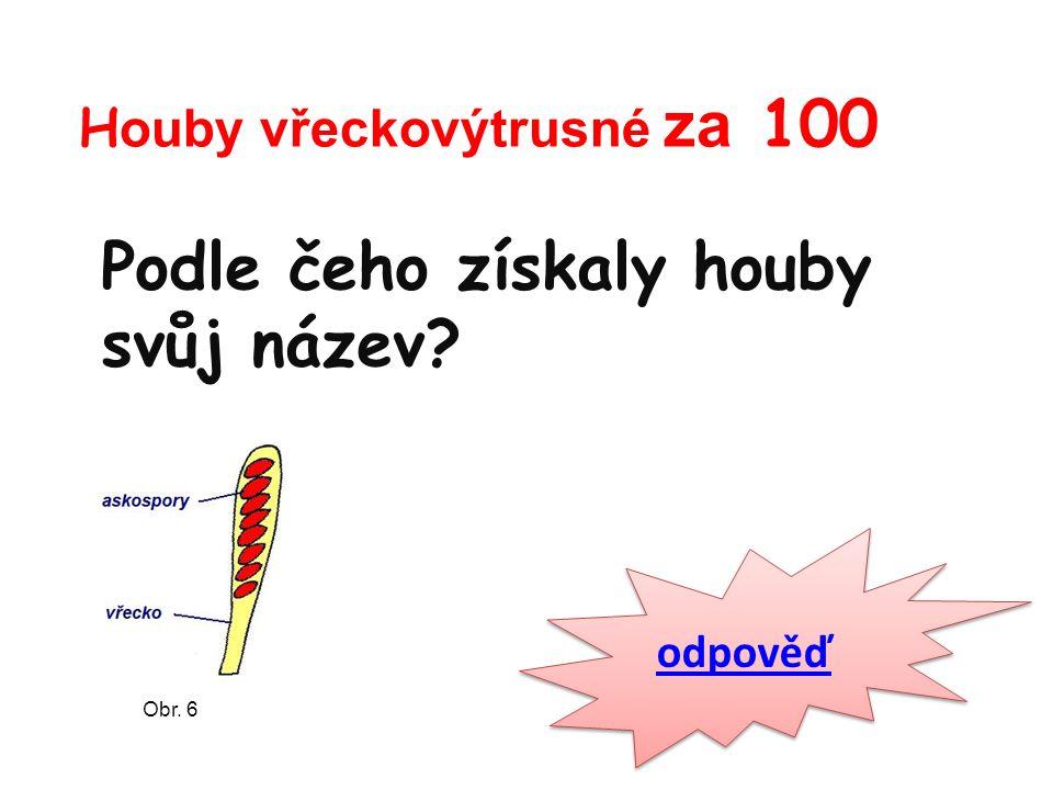 H ouby vřeckovýtrusné za 100 Podle čeho získaly houby svůj název odpověď Obr. 6