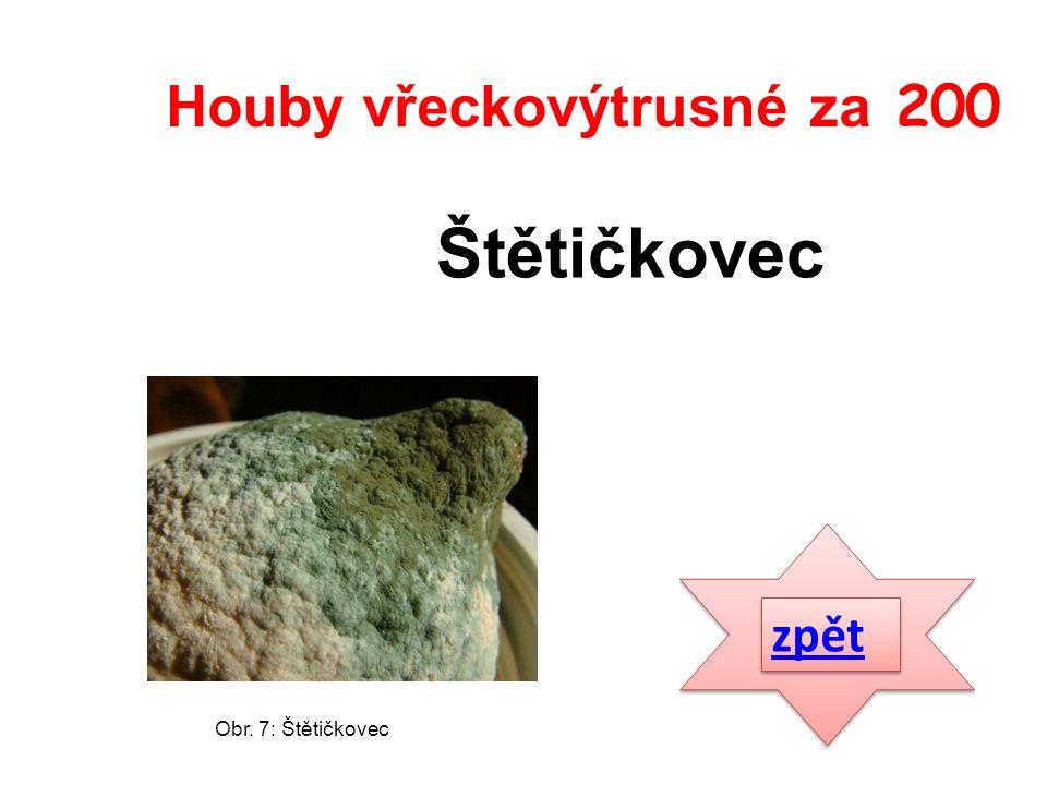 zpět Štětičkovec Houby vřeckovýtrusné za 200 Obr. 7: Štětičkovec