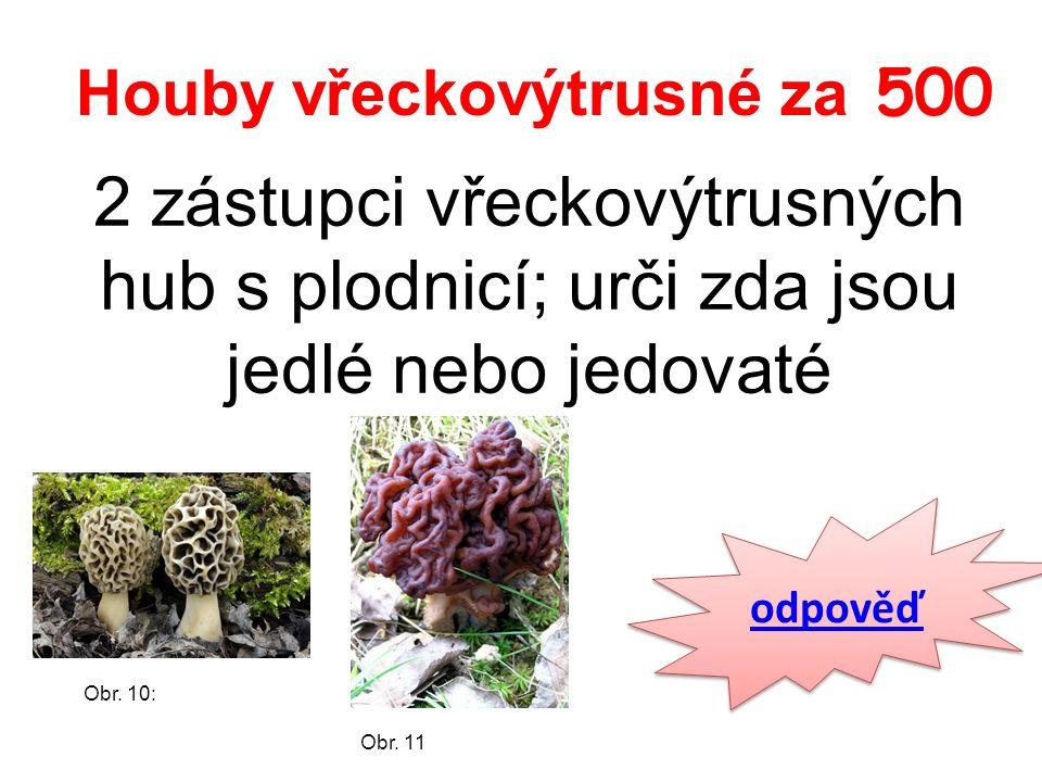 Houby vřeckovýtrusné za 500 2 zástupci vřeckovýtrusných hub s plodnicí; urči zda jsou jedlé nebo jedovaté odpověď Obr.