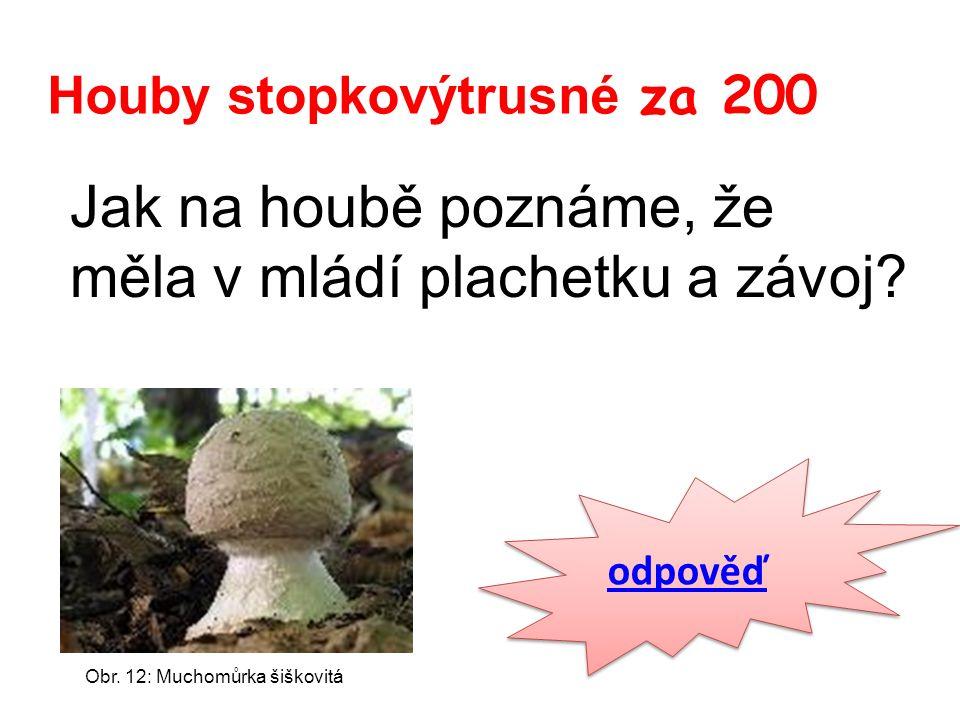 Houby stopkovýtrusné za 200 Jak na houbě poznáme, že měla v mládí plachetku a závoj.