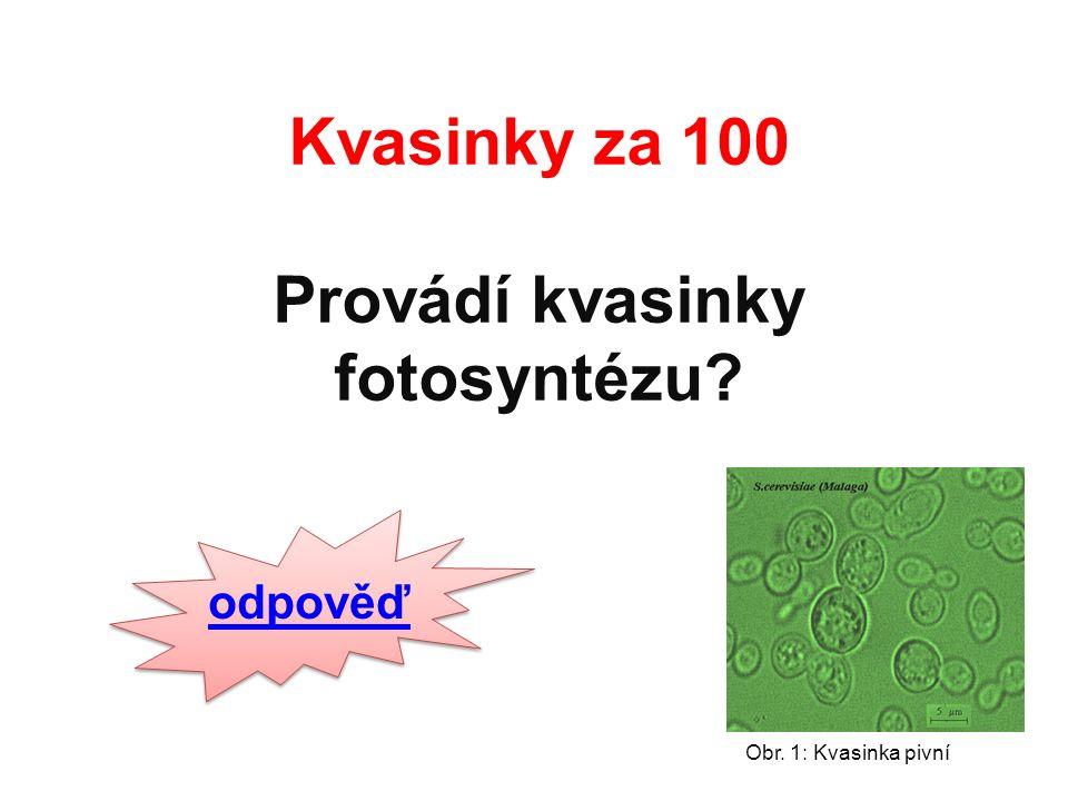 Kvasinky za 100 Provádí kvasinky fotosyntézu odpověď Obr. 1: Kvasinka pivní