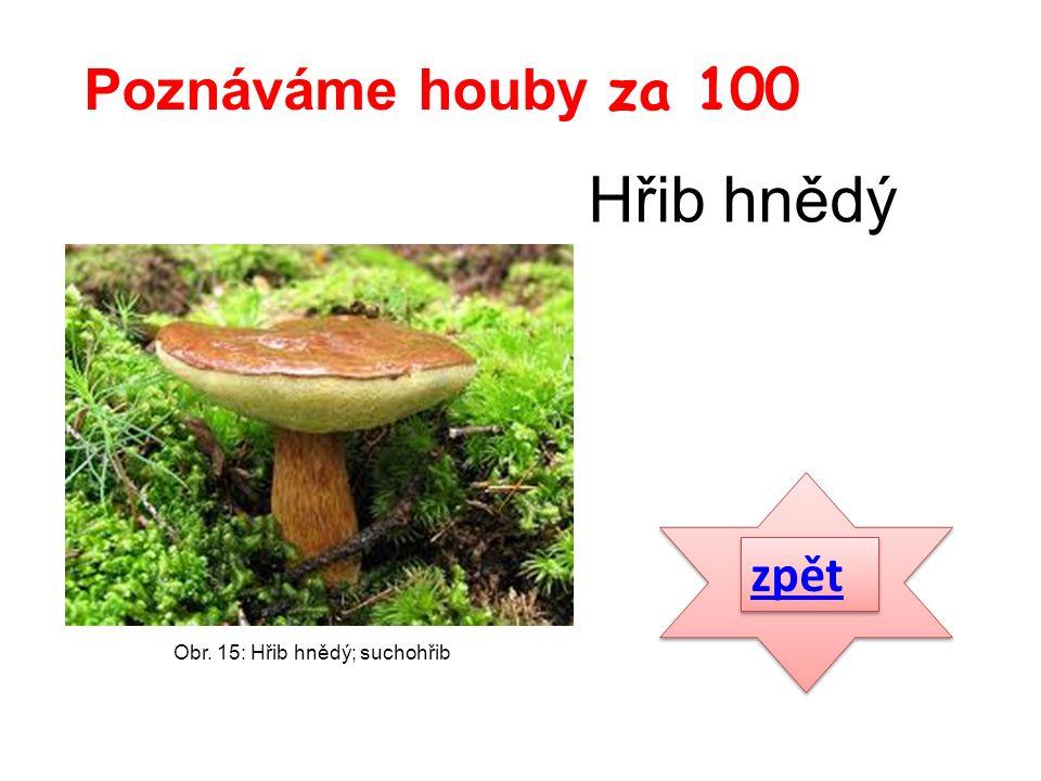 zpět Poznáváme houby za 100 Obr. 15: Hřib hnědý; suchohřib Hřib hnědý