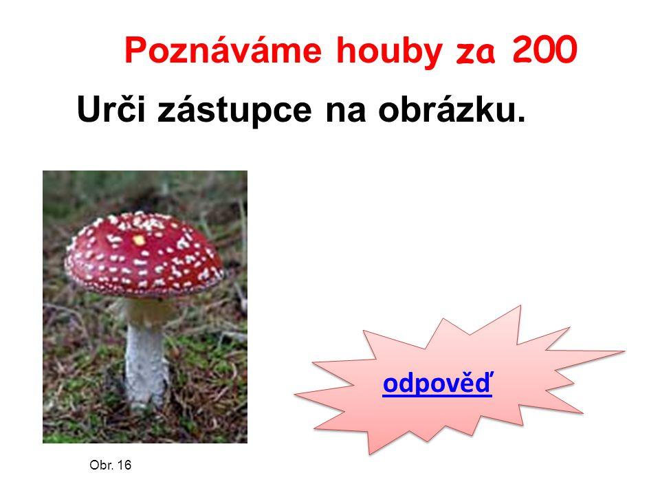 Poznáváme houby za 200 odpověď Obr. 16 Urči zástupce na obrázku.