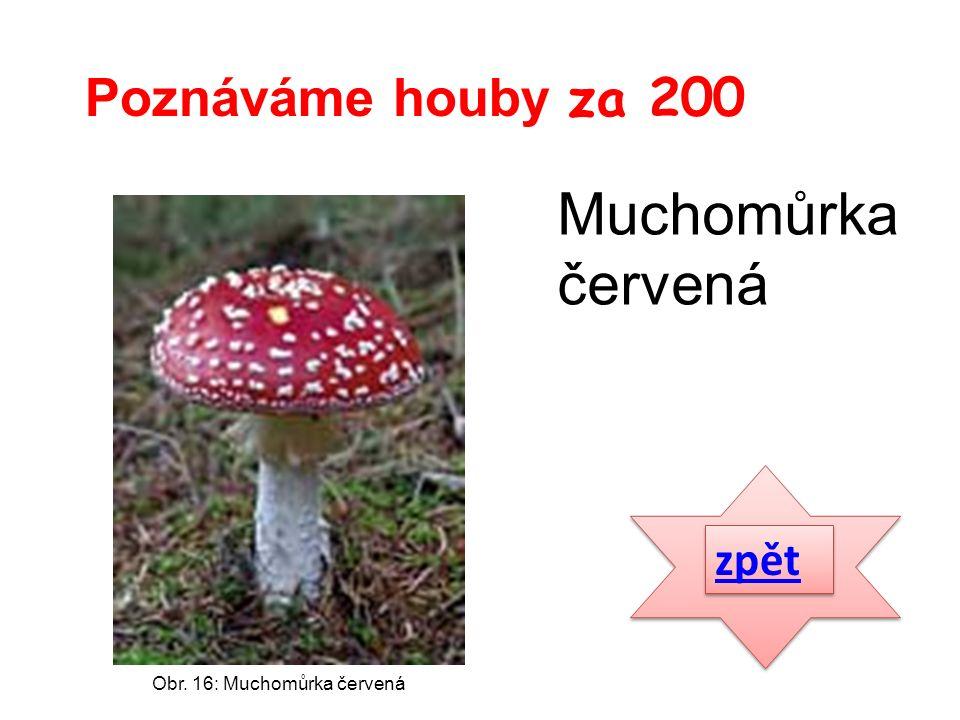 zpět Poznáváme houby za 200 Obr. 16: Muchomůrka červená Muchomůrka červená