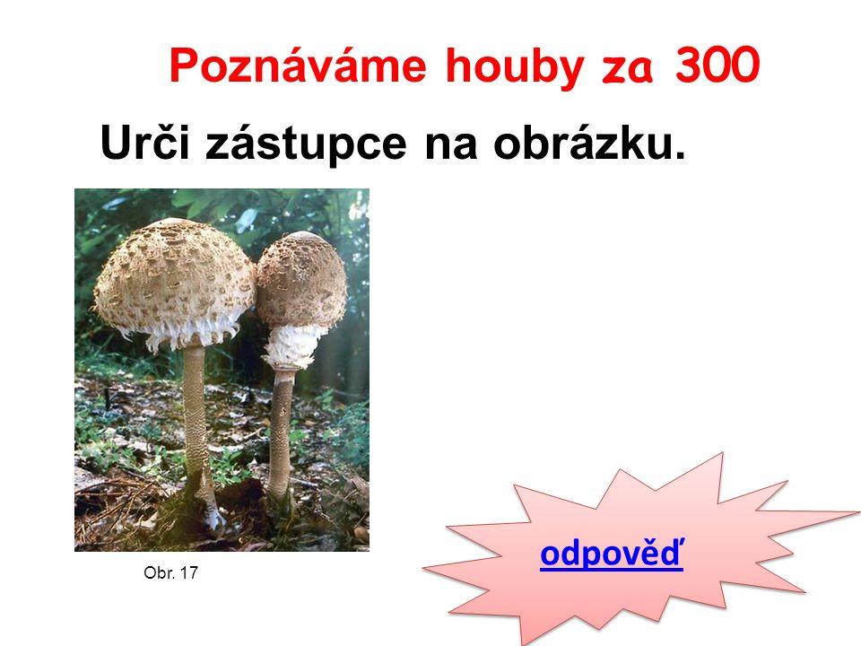 Poznáváme houby za 300 odpověď Obr. 17 Urči zástupce na obrázku.
